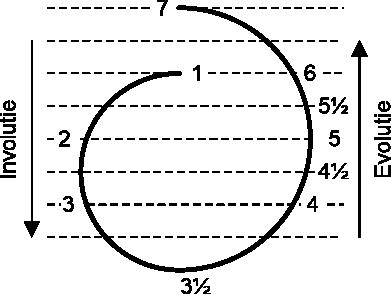 De Cyclus van de Zeven Wortelrassen