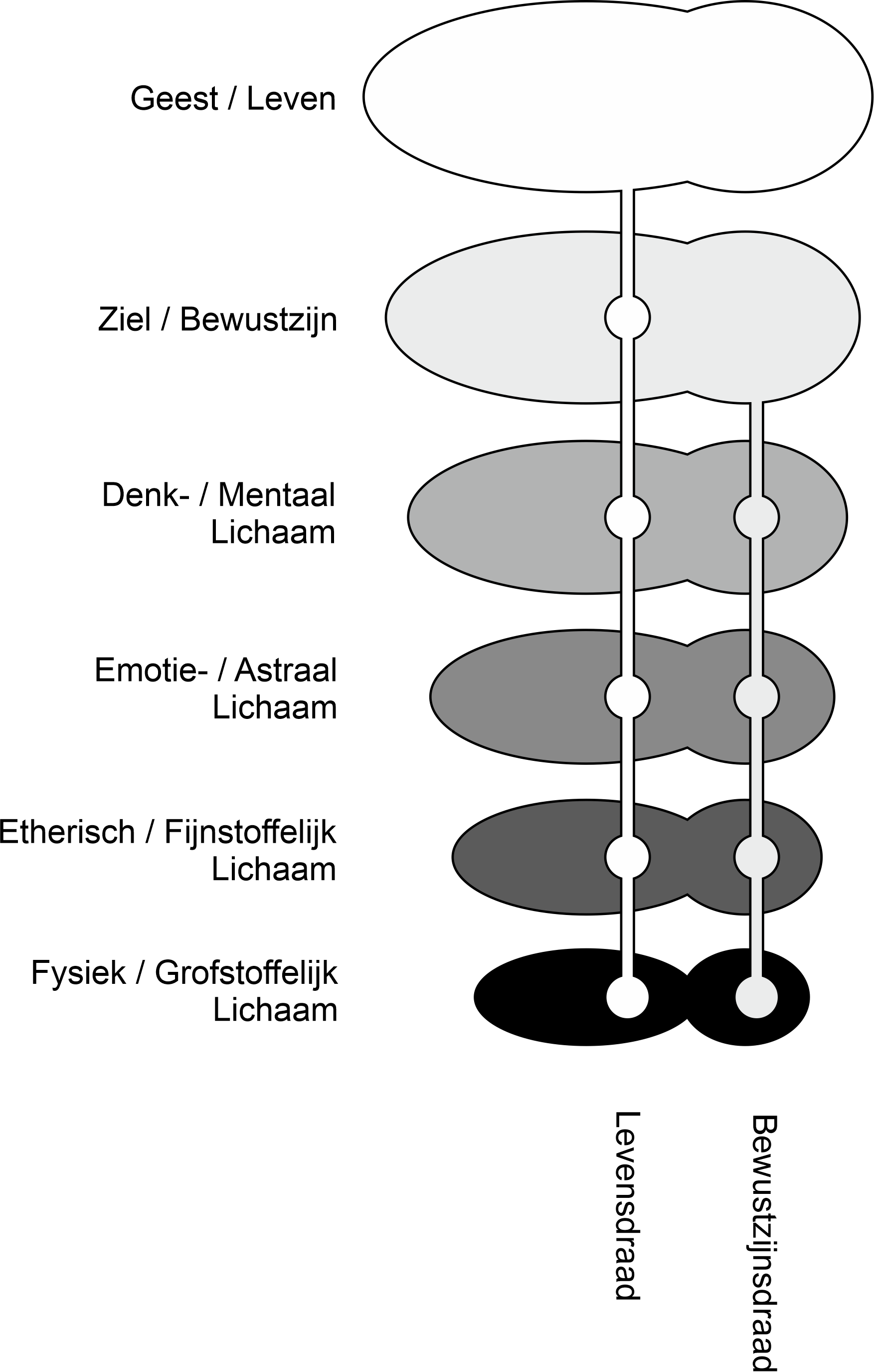 Overzicht van de Lichamen en Draden.